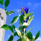 墓地の種類や費用相場、購入する時に気を付けなくてはならいことなどを知っておきましょう!